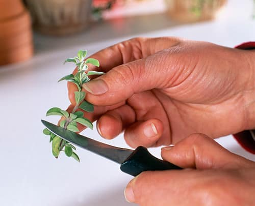 Root Herb Cuttings from Store 4