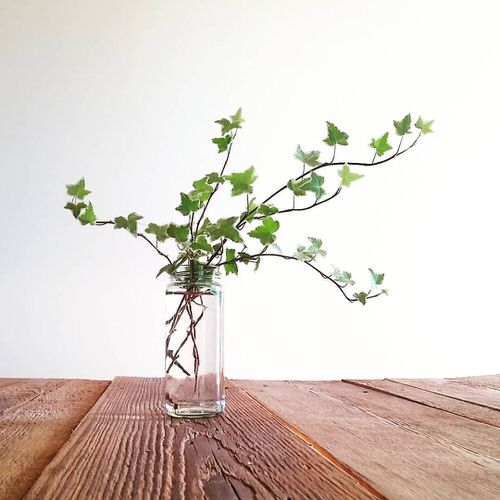 Plants You Can Start with One Cutting and a Glass of Water 3