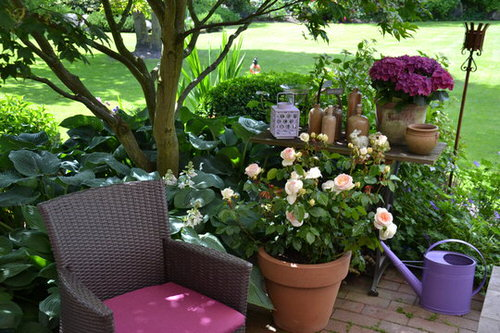 Pictures of Roses in Pots 4