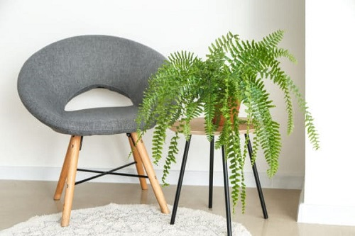 How to Keep your Ferns Lush and Beautiful