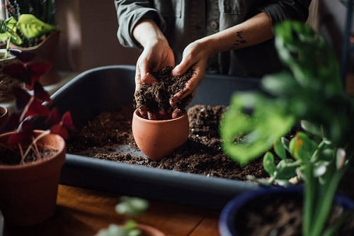 Mistakes to Avoid When Repotting Houseplants