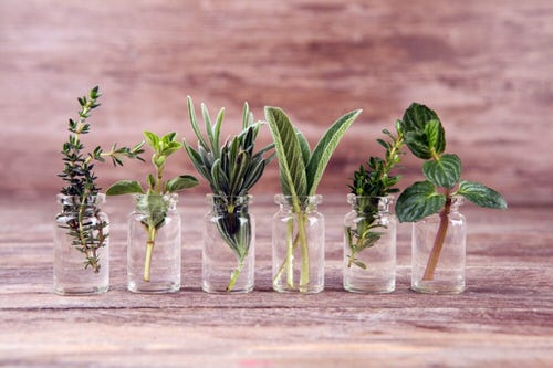 Root Herb Cuttings from Store