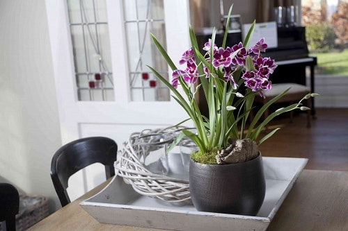 Homemade Plant Food for Orchids