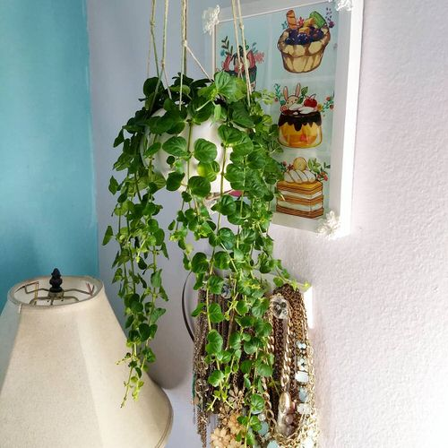 Pictures of Cascading Plants in Home