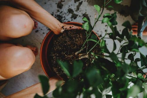 Quick Checklist to Revive Your Dying Houseplants