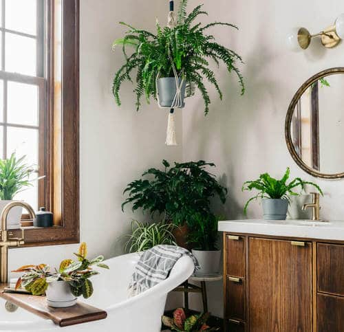 Pictures of Ferns in Bathroom 6
