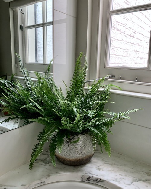 Pictures of Ferns in Bathroom 7