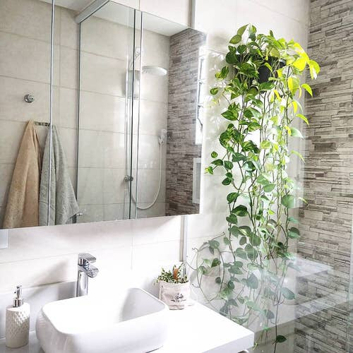Pictures of Bathroom with Plants 8