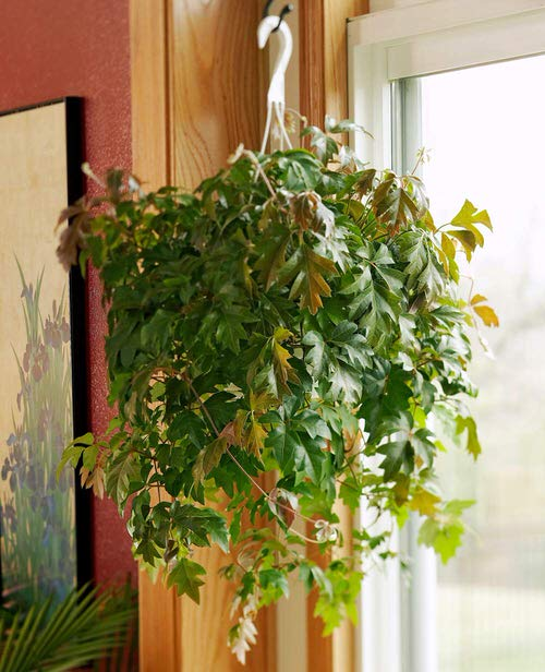 Pictures of Cascading Plants in Home 8