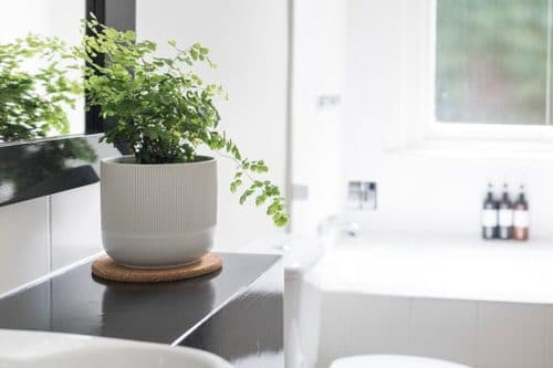 Pictures of Ferns in Bathroom 10