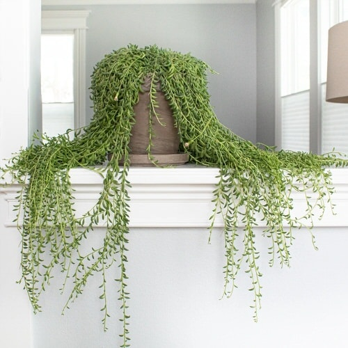 Pictures of Cascading Plants in Home 4
