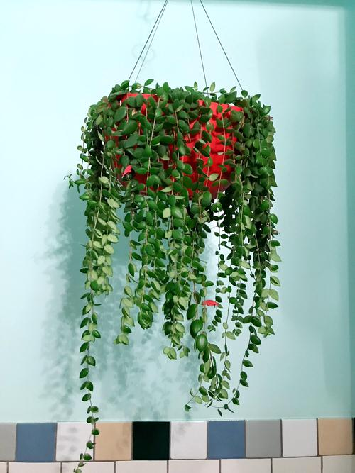 Pictures of Cascading Plants in Home 15