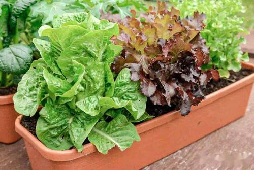 Best Container Vegetables 2
