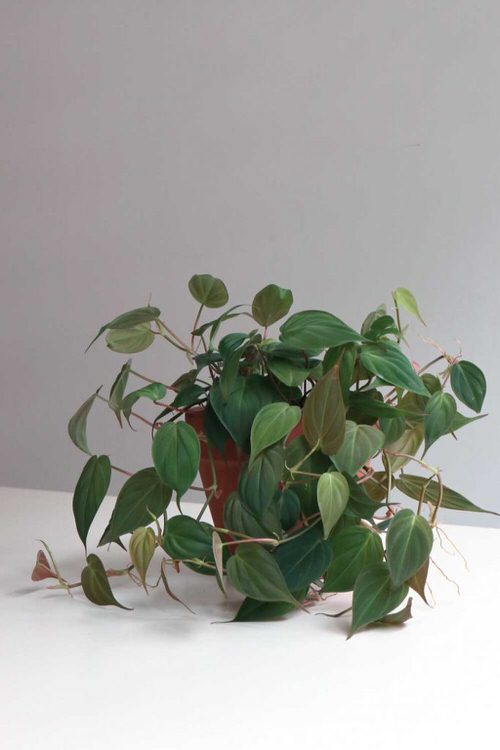 Pictures of Cascading Plants in Home 7