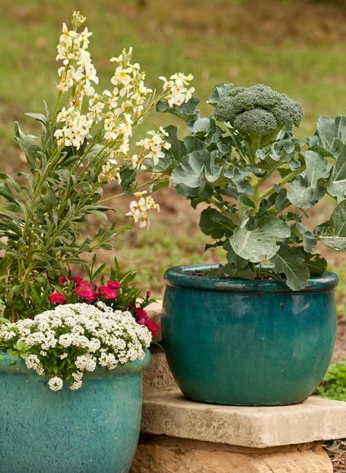 Best Container Vegetables 3