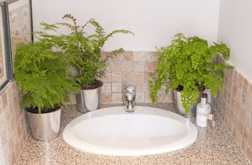 Pictures of Ferns in Bathroom 3