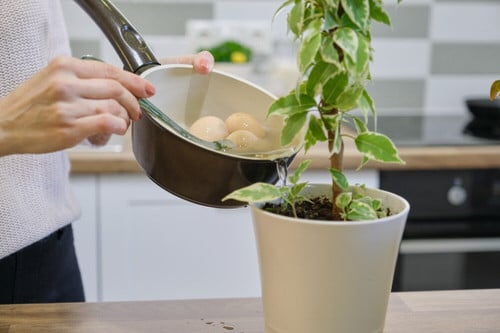 Quick Checklist to Revive Your Dying Houseplants 4