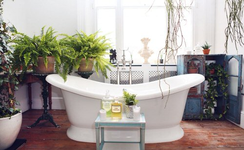 Pictures of Ferns in Bathroom 4