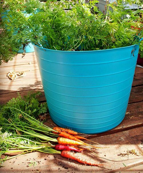 Best Container Vegetables 5