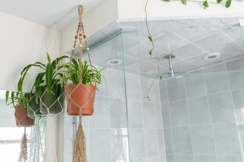 Pictures of Bathroom with Plants 5