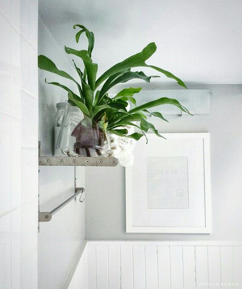 Pictures of Ferns in Bathroom 5