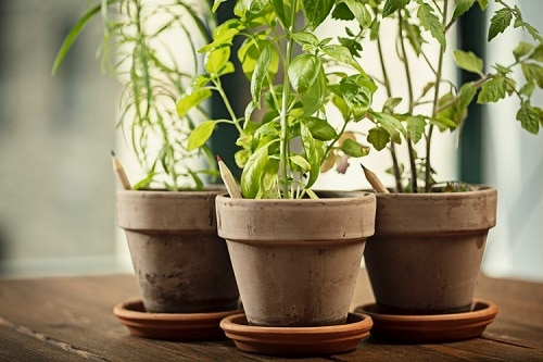 How to Tell When Your Plants Need Watering Using a Pencil