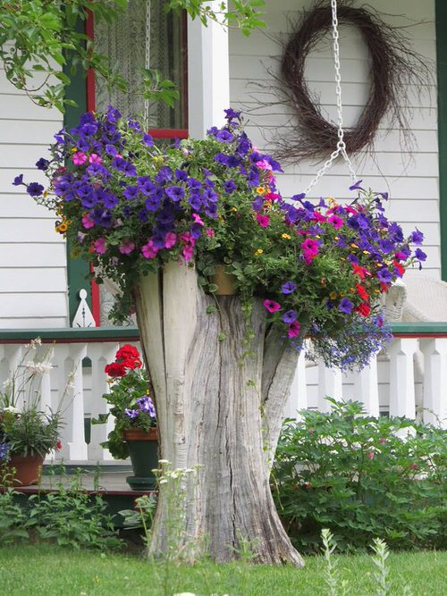 Amazing Things to Do with Petunias 4