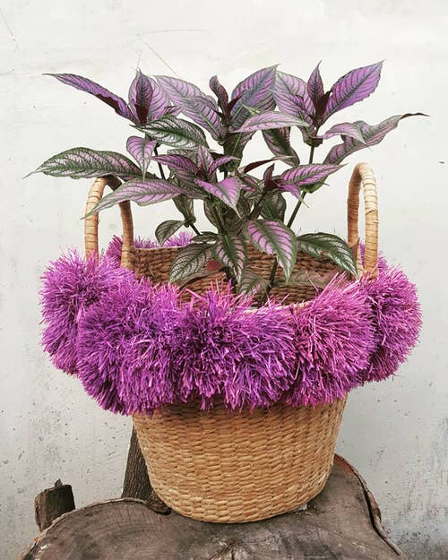 Gorgeous Purple Houseplants 9