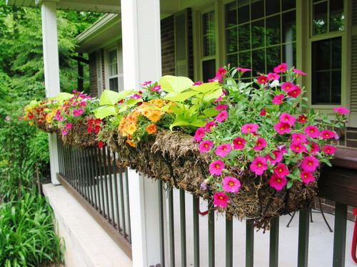 Amazing Things to Do with Petunias 2