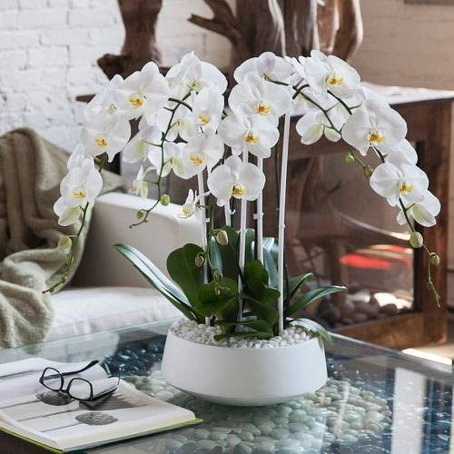 Orchids with Decorative Foliage 2