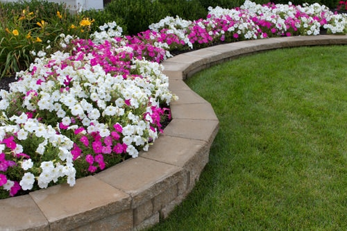 Amazing Things to Do with Petunias 3