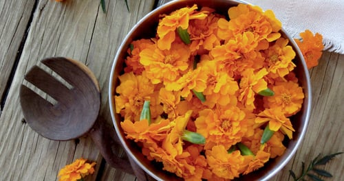 Reasons Why Marigold is Good for Your Garden 2