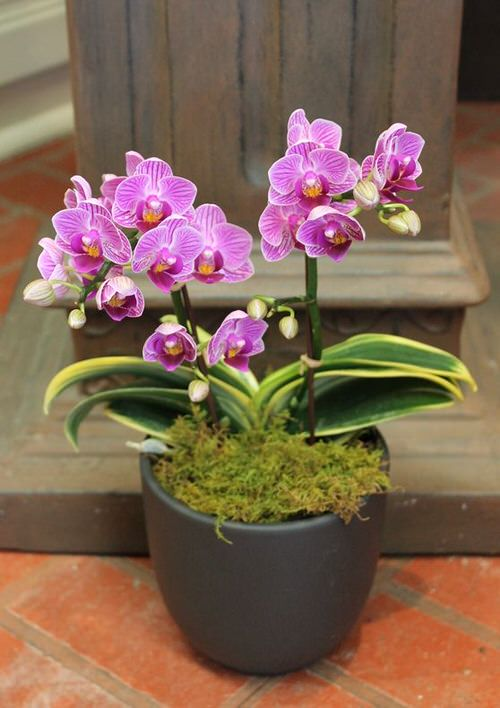 Orchids with Decorative Foliage 4