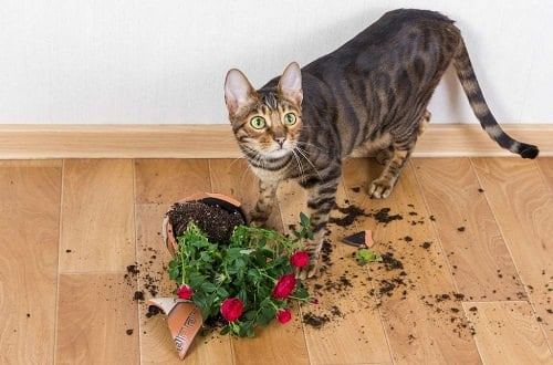 How to Keep Cats Away from Houseplants