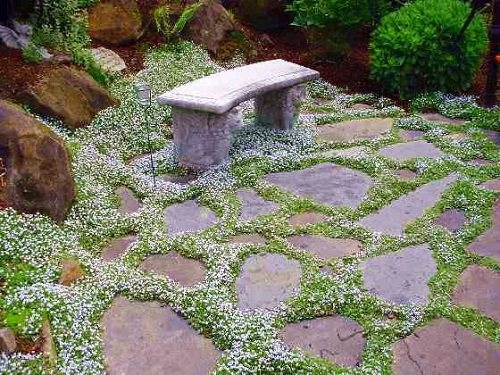 Best Walkable Ground Covers