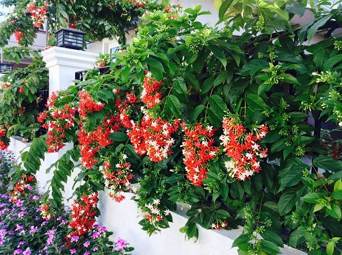 Best Plants to Cover a Fence 42