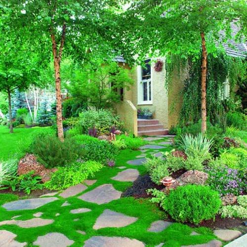 Best Walkable Ground Covers 5