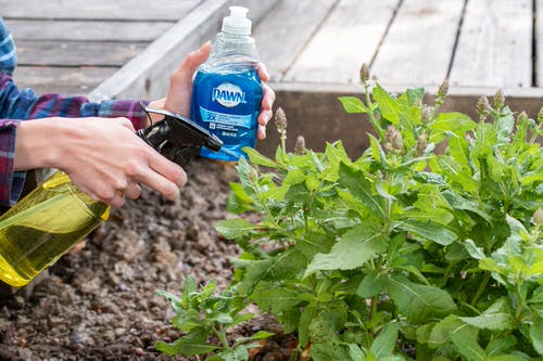 Dawn Dish Soap Uses in the Garden