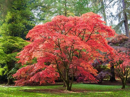 Trees With Red Leaves 8