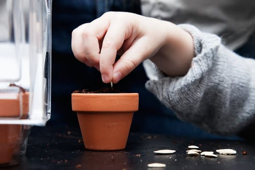 Seeds to Sow for Food in Less than a Month