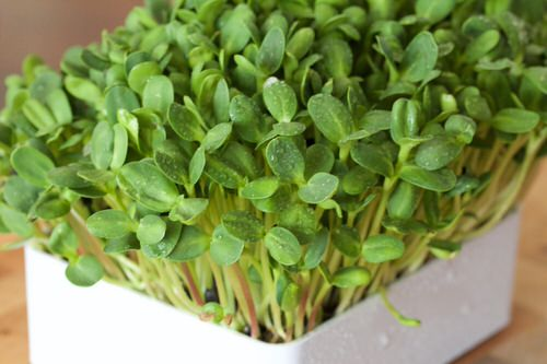 Seeds to Sow for Food in Less than a Month 11