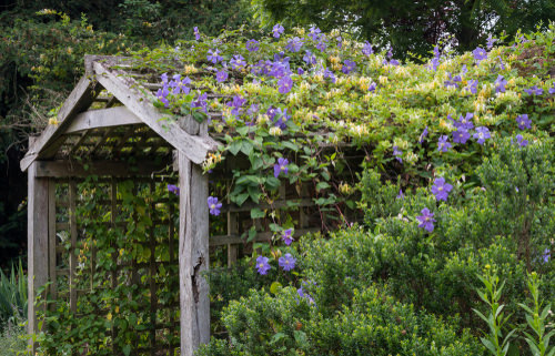 Beautiful Ideas with Clematis in the Garden 4