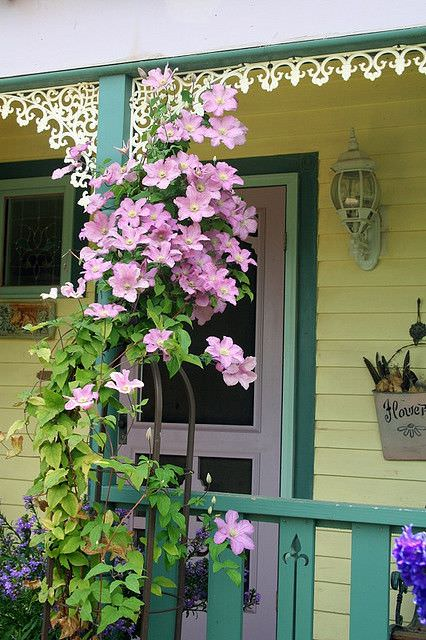 Beautiful Ideas with Clematis in the Garden 5