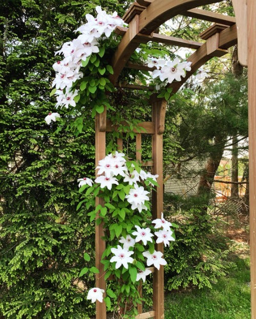 Beautiful Ideas with Clematis in the Garden 6