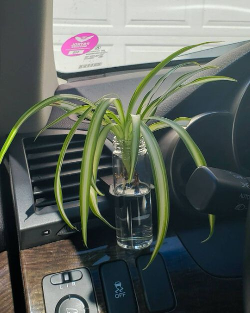 Plants You Can Grow in Car 4