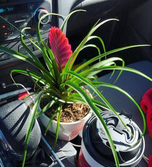 Plants You Can Grow in Car 5