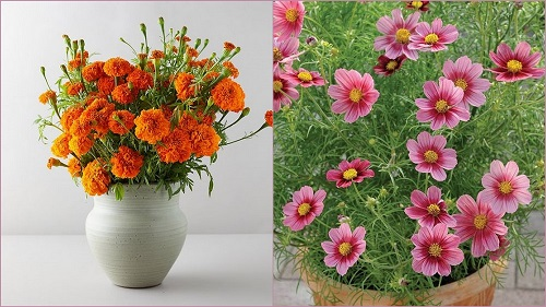 Birth Month Flowers with Meanings 44