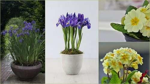 Birth Month Flowers with Meanings 89