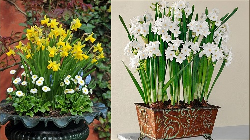 Birth Month Flowers with Meanings 3