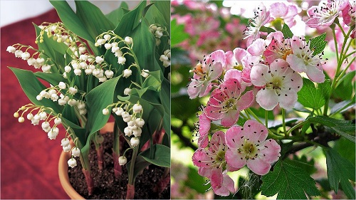 Birth Month Flowers with Meanings 4